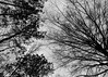 You Thought You Loved Me (that_damn_duck) Tags: blackwhite monochrome nature pointofview treebranches bw blackandwhite