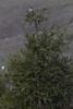 IMG_3390 (armadil) Tags: edgewoodpark bird birds jay jays scrubjay