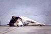 Lobita relajada. (Wal Wsg) Tags: dogs dog perro 7dwf 7dwffauna phwalwsg animalworld worldanimal mundoanimal perrito perrofeliz perroanimal doganimal