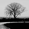 Passavant-sur-Layon - D 170 (pom.angers) Tags: panasonicdmctz101 february 2018 maineetloire paysdelaloire france europeanunion passavantsurlayon cholet choletais mauges vihiersois 49 tree 200 100 300 5000