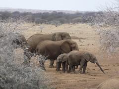 P1010621 (dieter.schultheiss) Tags: namibia naankuse lodge erindi game sossusvlei swakopmund safari cheetah lion gepard oryx dunes elephant elefant wild dog wildhund gnu zebra crocodile krokodil san bushmen buschmänner dead vlei solitaire