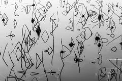 Operazione Caos (albi_tai) Tags: rami acqua water riflesso tranquillità specchio mirror reflex segni caos lagodicomabbio ternate varanoborghi albitai albimont nikon nikond750 d750 neltunneldelbn bianco nero bianconero biancoenero bn bw blackwhite black white