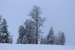 Champex-Lac (bulbocode909) Tags: valais suisse champexlac arbres nature montagnes hiver neige brouillard stratus