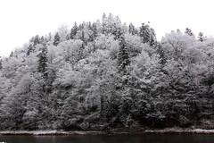 zima Pieniny drzewa 2