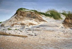 Sand Dune along NC Highway 12 (PhotosToArtByMike) Tags: outerbanks northcarolinahighway12 obx capehatterasnationalseashore dunes sanddunes nchighway12 bodieisland northcarolina nc12 nc outerbanksnorthcarolina usnationalparkservice darecounty