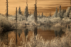 Home, home on the Bog (Poppa Gene) Tags: infrared 720nmirconvertedcamera pond nh
