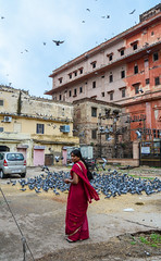 A woman playing with pigeons (phuong.sg@gmail.com) Tags: animal arm asia asian background beautiful beauty bird black city closeup color day delhi dove eat feather feed feeding flying food friendship girl gray green group hand happy human india life natural nature outdoor park people pigeons portrait rajasthan saree scene seed square summer symbol tourism urban white wildlife wing woman young