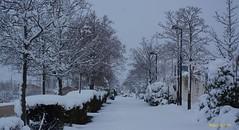 Año de nieves,,,,, (Miguel. (respenda)) Tags: olvega soria nieve árbol caminoverde parque cielo nevar nevado españa spain castilla castillayleon