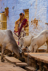 Jaisalmer, India (Aicbon) Tags: verde jaisalmer india indian people cow vaca animal perosna portrait retrato asia asiatic asian hindu city street canon fort ciudaddorada desert thar rajastan rajasthan rajastaní colors gente northindia indianorte