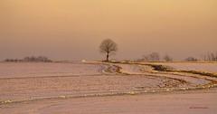 Pour ma fille Manon. (gillesfournier005) Tags: campagne neige d5100 arbre couleur or