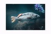 Aquarium (Krasne oci) Tags: fish aquarium ocean sea evabartos texturedphoto photoart newportaquariumoregon
