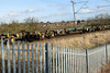 607002 Kingsthorpe 300118 (Dan86401) Tags: wilsonscrossing kingsthorpe northampton wcml 4m58 607002 fta freightliner fl inner intermodal modal containerflat wagon freight arbelfauvet