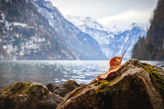 Berchtesgadener Land Königssee (einhundertstel.eu) Tags: berchtesgaden lake königssee outdoor landscape nature leaf stone water mountain