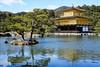Kinkakuji / Kyoto (thedailyjaw) Tags: nikon japan kyoto city nature garden old capital kinkakuji goldentemple serenity placid calm still bonsai tree water lake pond shrine temple spirituality populated tourist d610