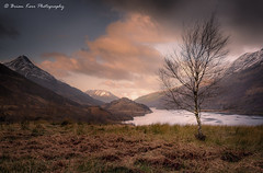 A Highland Landscape (.Brian Kerr Photography.) Tags: scotland scottishlandscapes scottish scotspirit scottishhighlands scottishlandscape vanguarduk formatthitech sonyuk a7rii kinlochleven lochleven birchtree photography outdoor opoty outdoorphotography onlandscape nature naturallandscape natural briankerrphotography briankerrphoto landscape mountains loch water trees sunrise availablelight sonya7rii clouds sky colour papofglencoe rass mountain tree grass field owl