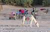 K3AR9467a (aerre64) Tags: aerre64 pentax k3 k20d marocco maroc deserto colori su msabbia atlante