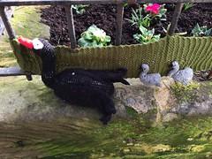 Black Swan & Cygnets (Glass Horse 2017) Tags: guisborough yarnbombing knitting wool birds anonymous westgate blackswan cygnets flowerbed primula