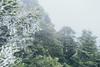 _MG_3756 (waychen_C) Tags: nantou renai renaitownship hehuanshan hehuanmountain fog mist now taiwan 台灣 南投 仁愛 仁愛鄉 合歡山 wuling 武嶺