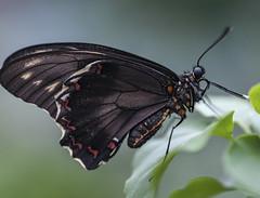 Butterfly world swindon (mark.abrams81) Tags: