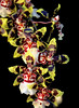 Tiger (WinRuWorld) Tags: latitude23glasshouse royalbotanicgardens sydney nsw newsouthwales orchid flower plant botany flora oncidium tigerorchid orchidaceae yellow red bright dynamic glasshouse nature naturephotography naturalworld canon canonphotography flowerphotography