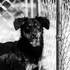 Madison14Jan20183-Edit.jpg (fredstrobel) Tags: pets animals blackandwhite dogs phototype pawsdogs decatur georgia unitedstates us