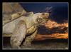 Schildkröte - Composing (roland_lehnhardt) Tags: allgäu canon ef50mmf18ii eos60d macro makroaufnahme nahaufnahme schmetterlinghausinpfronten tiere animals butterfly schildkröte testudinata