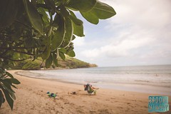 Week 5: Winter (bmurphy502) Tags: winter beach hawaii outoffocus green project52 2018p52 bright sunshine paradise warm holiday vacation dof tamron fun relaxing water ocean pacific nature sun light landscape sea