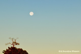 Dawn with a solitaire tree and the Supermoon, San Salvador