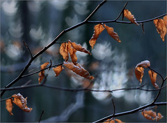 monde fabuleux / fabelhafte Welt (Gabi Wi) Tags: forest leaves bokeh birds shallowdepthoffield petzval58
