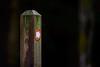this way (grahamrobb888) Tags: nikon nikond800 nikkor afnikkor80200mm128ed d800 birnamwood birnam perthshire scotland signpost sign pointer arrow footpath forest