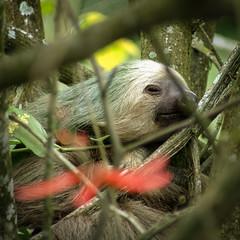 Costa Rica (LA-FR13) Tags: amérique costarica favoris photoanimalière sitesnaturels typesdelieux voyages photodart