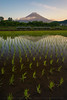 Mt Fuji Reflected In A Water Filled Rice Paddy (lestaylorphoto) Tags: japan yamanashi fuji mtfuji fujisan rice paddy reflection asia oriental travel nikon d610 leslietaylor lestaylorphoto 富士山 日本