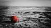 The buoy (Luca Tomelleri) Tags: mare spiaggia inverno black wite boa buoy winter nikon d90 nostalgico nostalgia italia italy winterseaside dinverno maredinverno