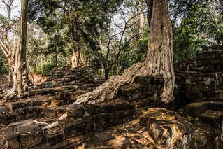Angkor   |   Strictly Roots