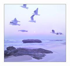 Nambucca Heads (NSW) (marcel.rodrigue) Tags: nambuccaheads nambuccascenery coffscoast midnorthcoast nsw australia marcelrodrigue photography jkamidnorthcoast mainbeach birds beach
