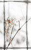 Dry Tiny Daises against Snow near Belvedere Castle, Central Park, NYC (hilarybachelder) Tags: uppereastside flower deadflower witheredflower fence a7rii bokeh composition dried fullframe frame thaw afterthestorm golden geometric goldenhour grayson garden geometry impressionism miniature macro closeup january lines mirrorless manhattan nyc negativespace sony sonya7rii cold peaceful park petals prime parallel pattern centralpark belvederecastle newyork newyorkcity quiet tranquil season snow vantagepoint viewpoint weather winter withered yellow nycparks snowbombcyclonegrayson snowbombcyclone bombcyclone snowfall