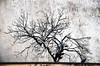 In attesa della primavera (gianclaudio.curia) Tags: alberi altocontrasto nikon digitale d7000 nikkor18105
