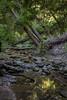 The Gorge (eddee) Tags: lionsdengorge nature preserve ozaukeecounty environment wisconsin water gorge ravine stream