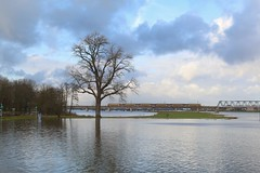 High waters (RW-V) Tags: canoneos70d canonefs35mmf28macroisstm deworp deventer gelderland overijssel ijssel river rivier paysbas niederlande thenetherlands nederland water train bridge tree arbre baum boom 100faves 150faves 175faves 200faves 225faves 250faves 275faves 300faves 325faves 2500views 350faves 375faves