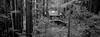 (Joseph Delgadillo) Tags: panf rodinal fujitx1 tx1 panoramic hasselblad xpan film highway1 pescadero 45mm