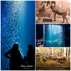 Wonders of Wildlife Collage (Thomas  Johnson Photography) Tags: springfield missouri unitedstates inside indoors canon digital 5d 5dmarkiv canon5dmarkiv water aquarium wondersofwildlife fish silhouette desertbighornsheep grandcanyonnationalpark fishing muledeer painting murals trees grass deer animals wondersofwildlifeaquarium voted1newattraction 2018 conservation thomasjohnsonphotography ©thomasjohnsonphotography ©2018thomasjohnsonphotography blue green reflectionsreflectedlight brown detail detailed basspro bassproshops