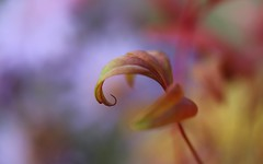Un Brin de Poésie.... (Callie-02) Tags: romantique tableau petitdétails macro canon bokeh automne extérieur jardin feuille aquarelle poétique douceur couleurs nature