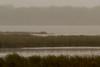 Dixon_JB_459_3969 (Joanne Bouknight) Tags: dixonwaterfowlrefuge illinois mist morning observationtower rain storm thewetlandsinstitute