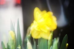 NSM04659 (rickytanghkg) Tags: minolta70210mm minolta sony a7ii sonya7ii flower