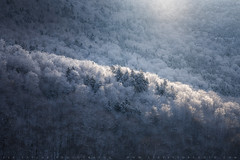 Snowglow (lestaylorphoto) Tags: newhampshire newengland whitemountains frost snow winter light morning mountains landscape nature nikon travel leslietaylor lestaylorphoto cold frozen freeze trees