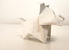 Little Terrier dog - Francisco Javier Caboblanco (Danielle Verbeeten) Tags: