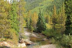 Halfmoon Creek (DavetheHiker) Tags: colorado co rockymountains rockies sawatchrange sanisabelnationalforest mountains view vista nature hiking water creek stream brook