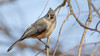 Tufted Titmouse in the Sunlight (Ken Krach Photography) Tags: tuftedtitmouse