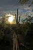 Tracks to the Sun (craigsanders429) Tags: tracks railroadtracks cactus saguarocactus sunsetphotography sunsets sunset sunandclouds sun arizona tucsonarizona desert sonorandesert