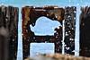 DSC_8684 (mdsmedia9) Tags: pier pointnepean rust sea silhouette splash